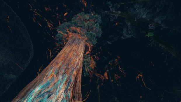 Treehugger Wawona, réalité virtuelle mais odeur bien réelle