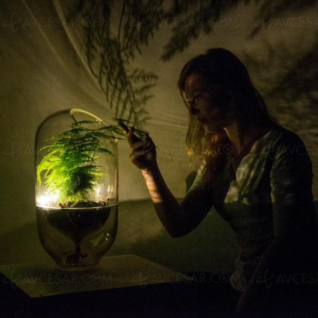 Lampe alimentée par une plante, d'extraordinaires possibilités à venir