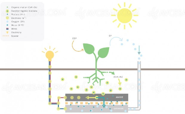 prev_lampe-alimentee-par-une-plante_1159