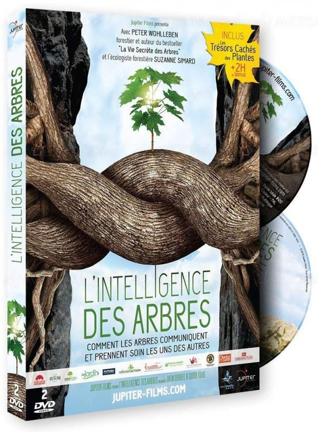 Découvrez «l'internet de la forêt» avec L'intelligence des arbres enDVD