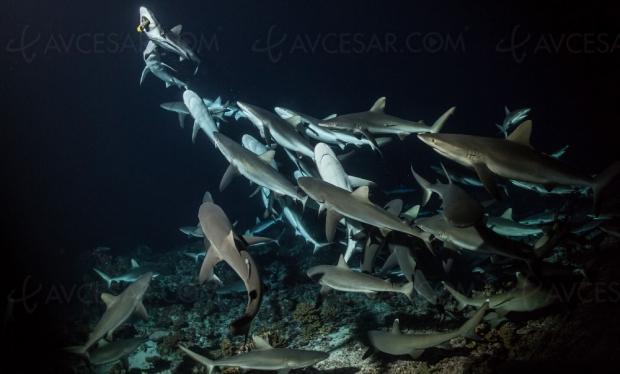 700-requins-a-la-cite-de-locean-en-reali