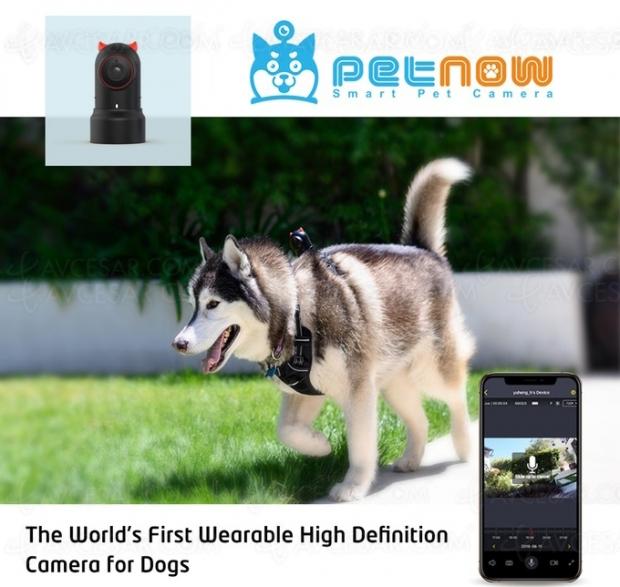Caméra PetNow pour voir ce que voit… votre chien