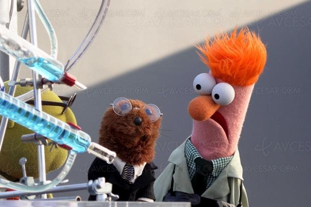 Nouveau Muppet Show : Kermit arrive cet été sur Disney+