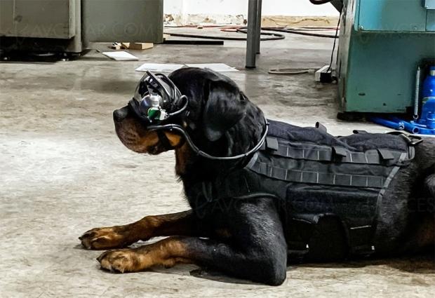 Premiers tests de lunettes de réalité virtuelle sur les chiens de l'armée US