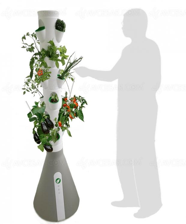 Green, bio, connecté, le Home Potager se développe