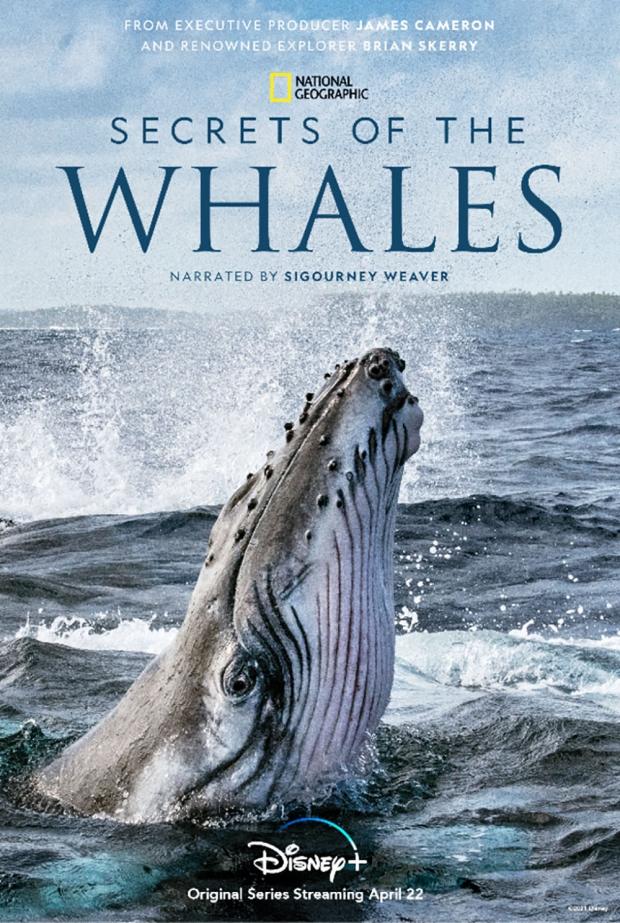 Les secrets des baleines : la série doc produite par James Cameron bientôt sur Disney+