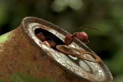 Minuscule, la vallée des fourmis perdues (2013)