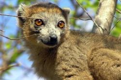Madagascar, le monde perdu (2011)